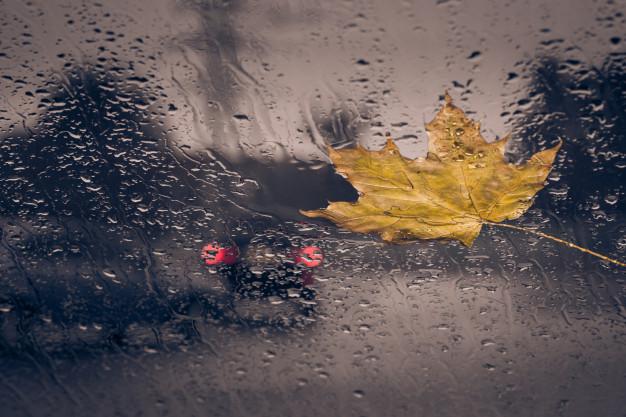 Como debes preparar tu coche para el otoño.